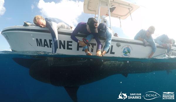 sharktagging30112016