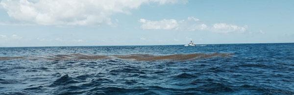 sargassum05052017