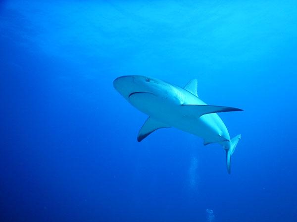 shark01062017